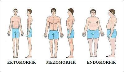 typy-metaboliczne.jpg?1407158418020
